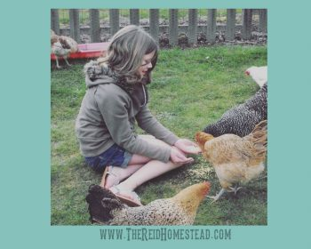 girl sitting on the grass feeding chickens scratch