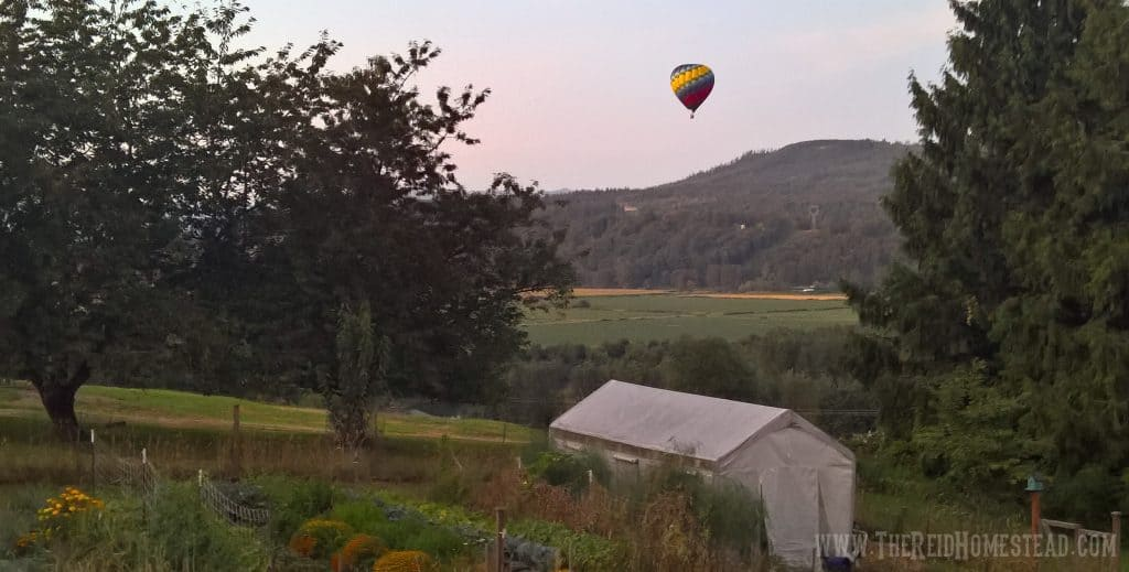 view of vegetable garden at the Reid Homestead overlooking the Snoqualmie valley with a hot air balloon passing by overhead