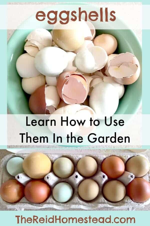 How to Use Egg Shells in the Garden-Learn the different ways you can use your egg shells to benefit your garden plants and improve your garden soil! The Reid Homestead #gardeninghacks #DIYGardenproject #eggs #gardeningideas #eggshells #gardening