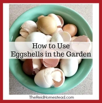 "bowl of eggshells with text overlay ""How to Use Eggshells in the Garden"""