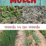 pinterest pin about mulching in the garden