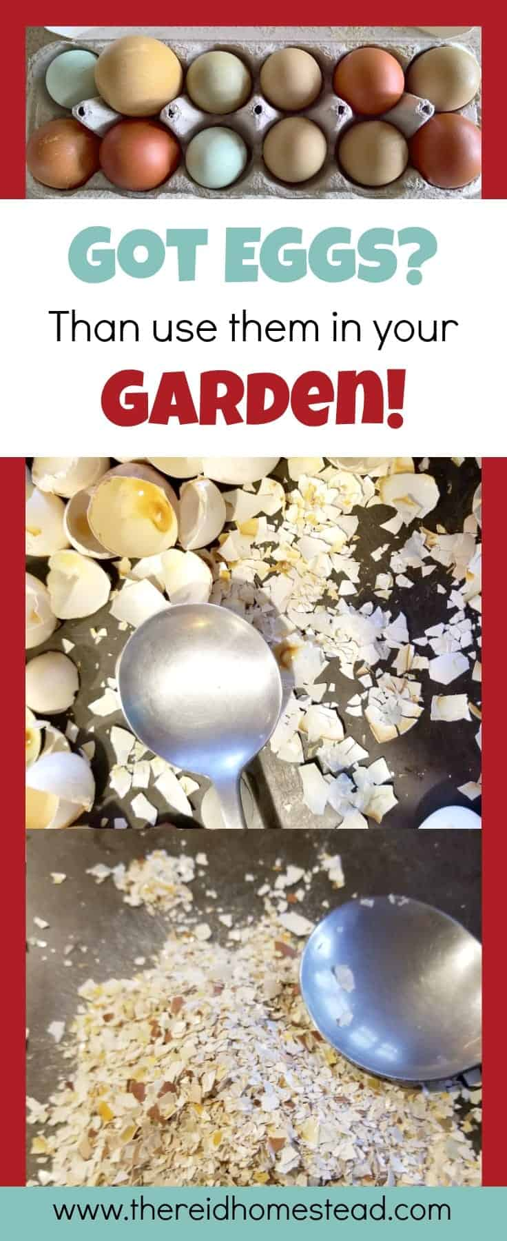 How to Use Egg Shells in the Garden-Learn the different ways you can use your egg shells to benefit your garden plants! The Reid Homestead
