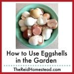 bowl full of used eggshells with text overlay How to Use Eggshells in the Garden