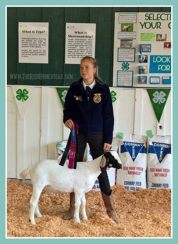 5 Things Friday - Favorite Homesteader Life, my daughter showing her FFA Boer goat and wanting me to show her on the blog! The Reid Homestead