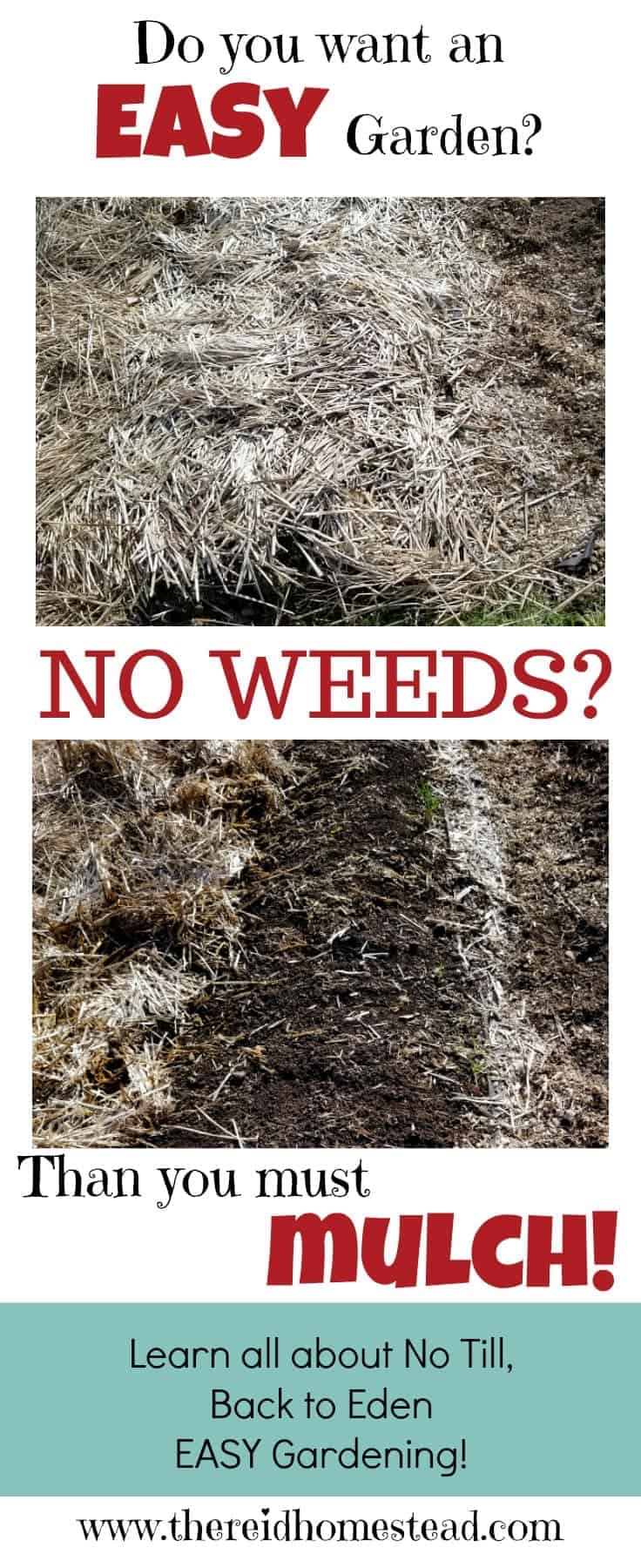 Want to learn how to garden with no weeds? Learn the secret of mulch and all the benefits it has in the garden. Easy Gardening! No Weeding! The Reid Homestead