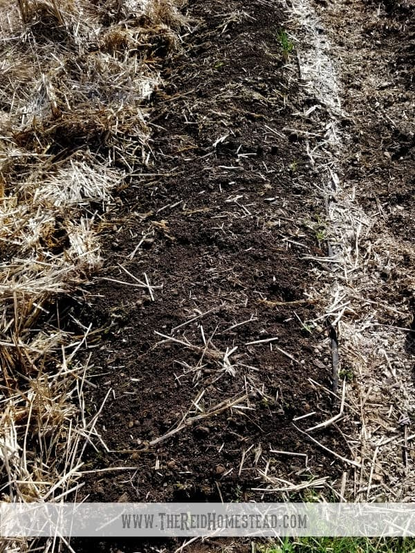 row in vegetable that was mulched with straw, straw removed and it is ready for planting