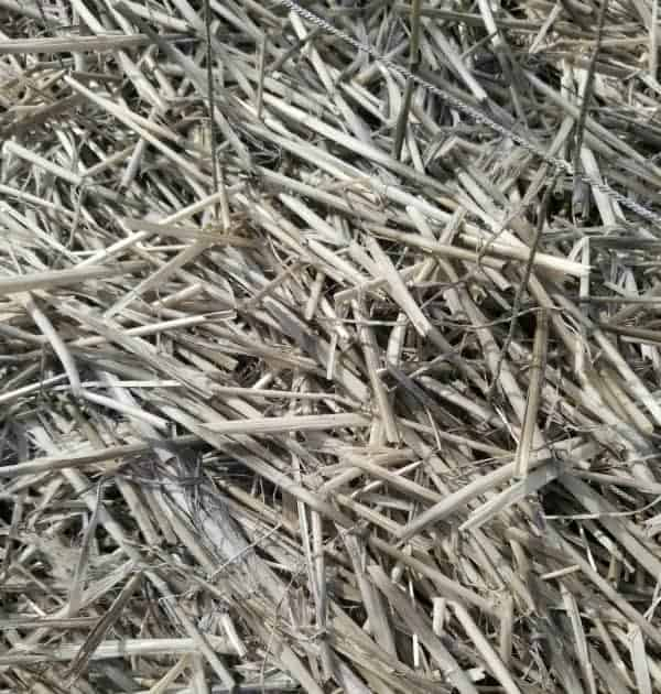 close up of straw mulch in the garden