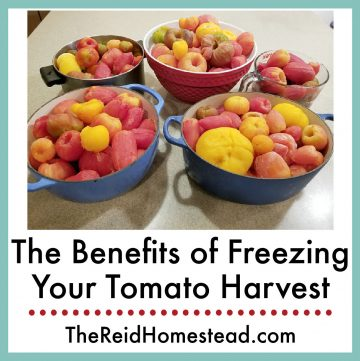 5 large pots or bowls full of peeled frozen tomatoes with text overlay The Benefits of freezing your tomato harvest