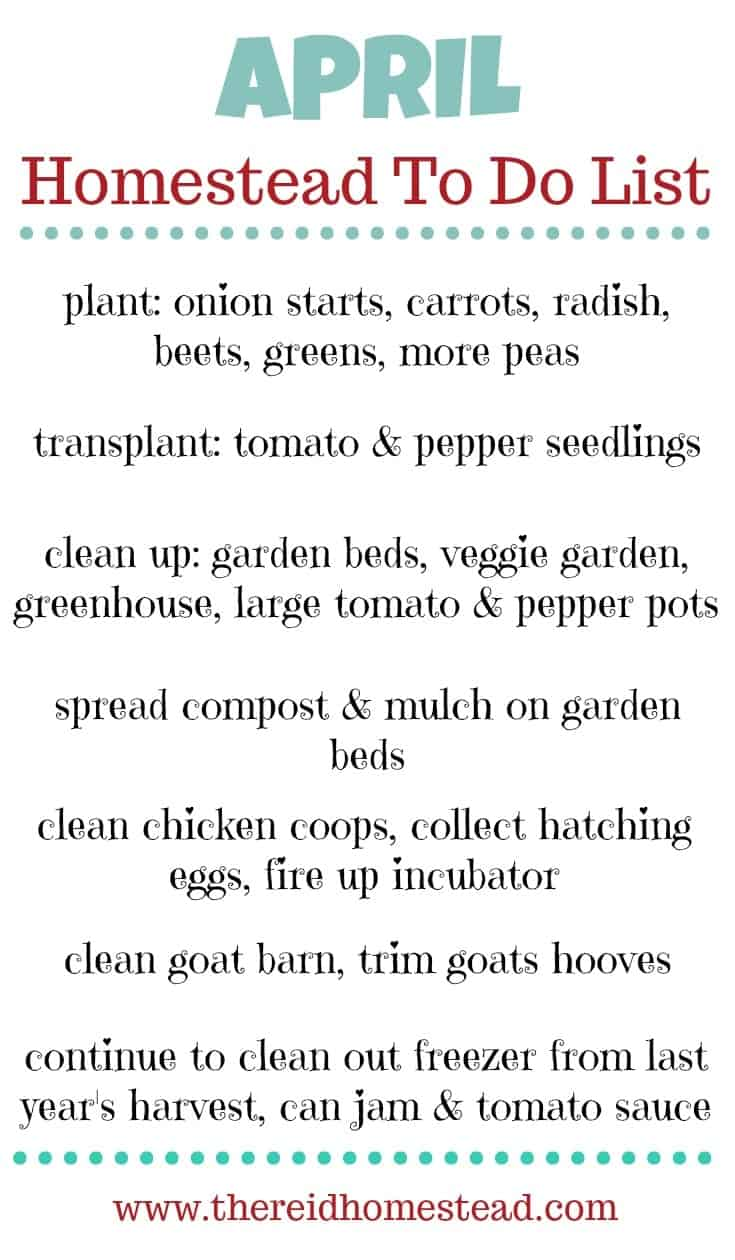 What is on your April Homestead To Do List? This time of year is crazy and our to do list grows longer every day! But here is what we will be tackling this month on The Reid Homestead