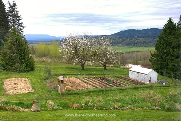 Our garden with our Cherry Trees in bloom! Come learn how to Grow Harvest Preserve with on at The Reid Homestead #cherrytrees #vegetablegarden #gardeningtips