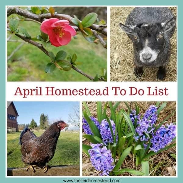 April Homestead To Do List