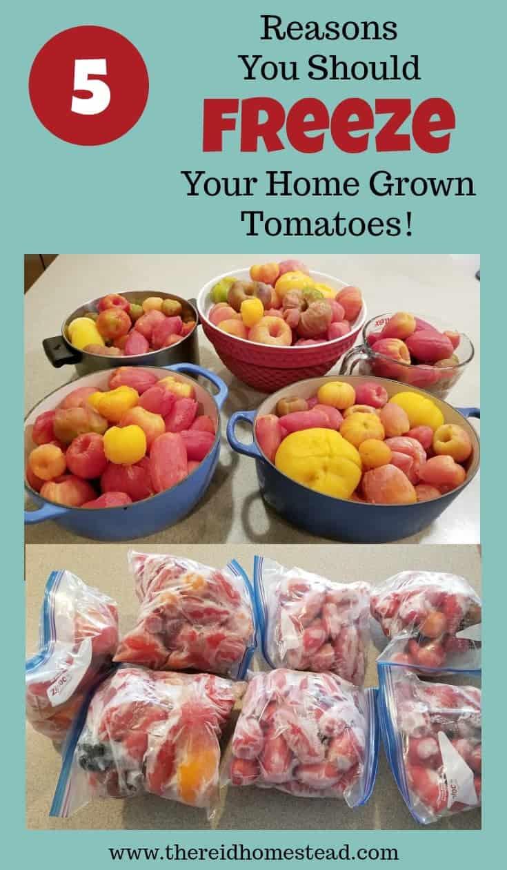 The Many Benefits of Freezing Your Tomato Harvest! #foodpreservation #tomatoes #tomatoharvest