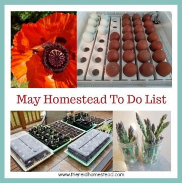May is Plant All The Things Month! Come see our May Homestead To Do List for the Pacific Northwest and make sure you check off all the boxes! - The Reid Homestead