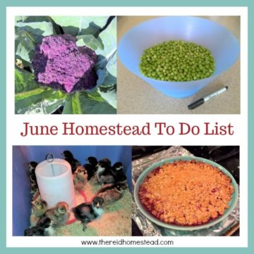 Our June Homestead To Do List for the Pacific Northwest. Stay on track and check off all the boxes! - The Reid Homestead