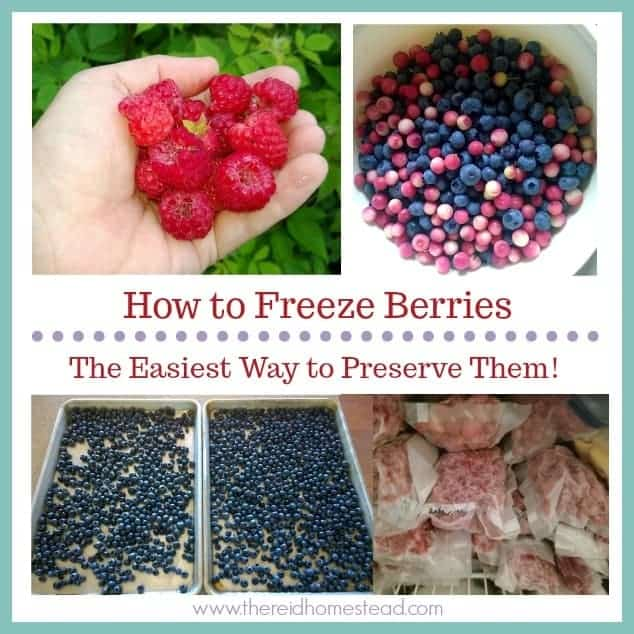"multiple images of berries with text overlay ""how to freeze berries"""