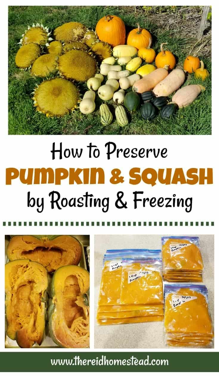 Learn how preserve your pumpkins and winter squash by roasting and freezing it! - The Reid Homestead #pumpkin #wintersquash #foodpreservation #preservingtheharvest