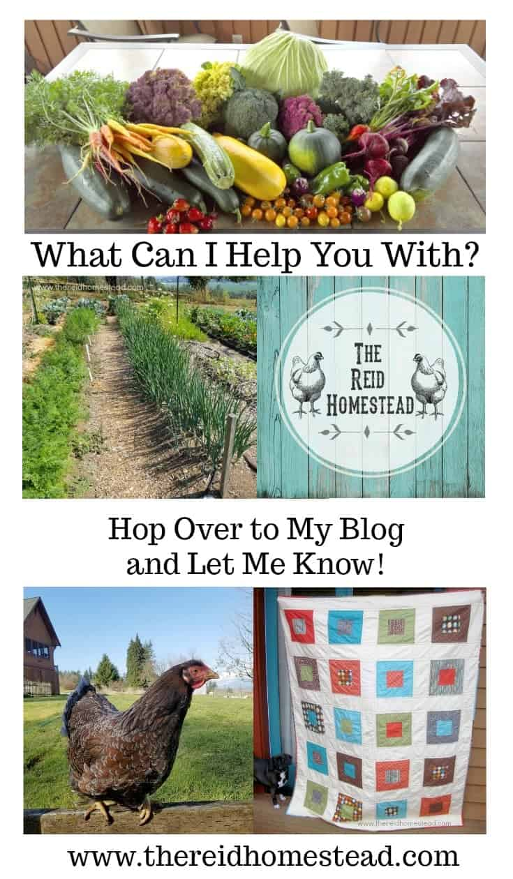 Homesteading Questions? I can help! Let me know! -The Reid Homestead #homesteadquestions #helponthehomestead #homesteading #homesteader #homesteadlife