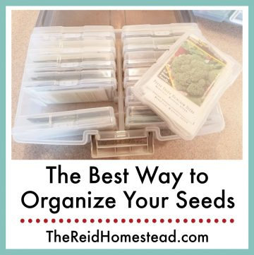 photo of seed packets stored in plastic photo storage boxes with text overlay The Best Way to Organize Your Seeds