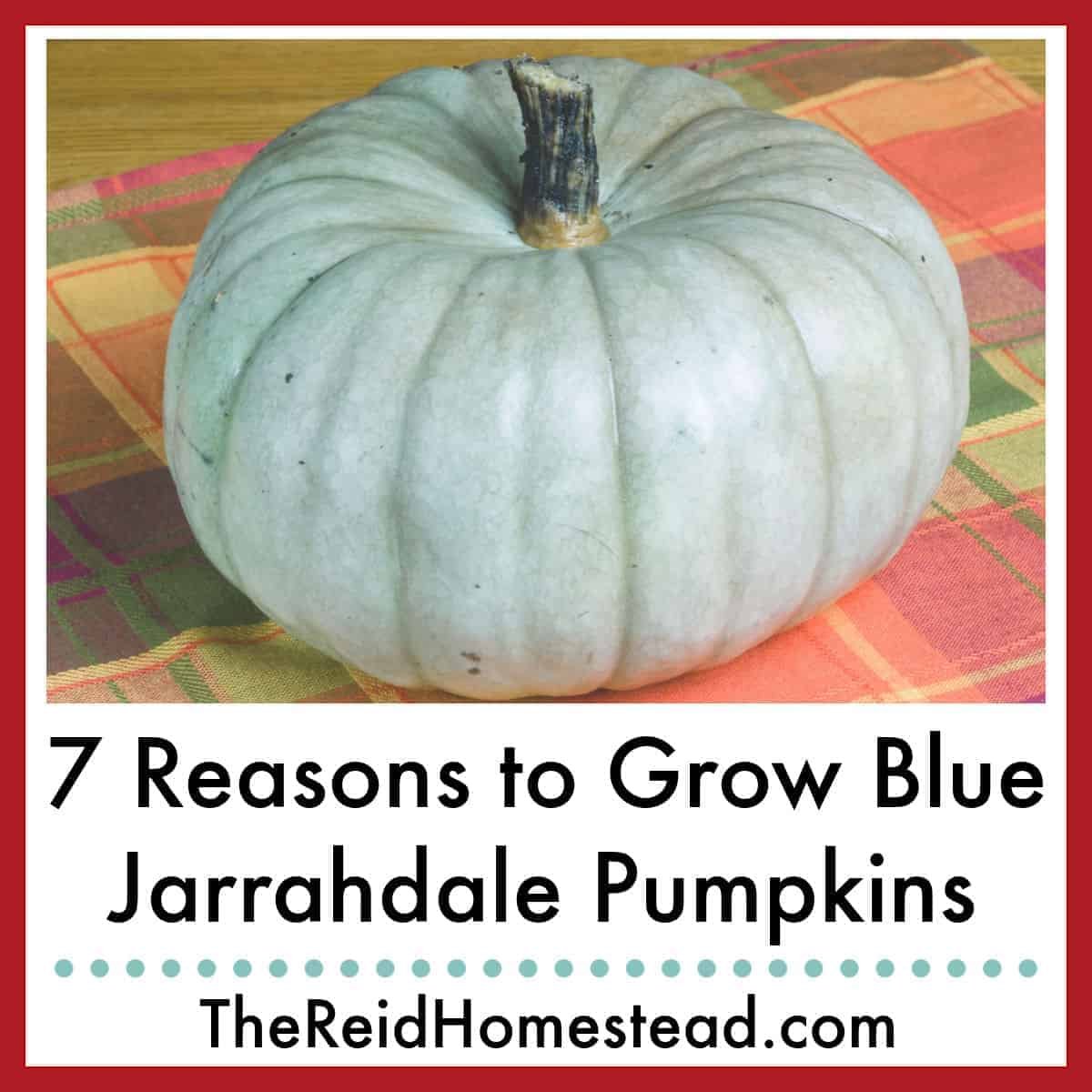 7 Reasons Why You Should Grow Blue Jarrahdale Pumpkins