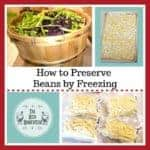 The Easiest Way to Preserve Beans, by freezing them! -The Reid Homestead #beans #foodpreservation #freezingbeans #preservetheharvest