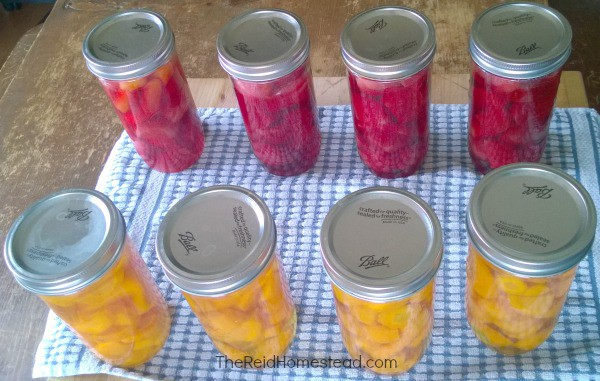 15 Reasons Wh You Should Be Pressure Canning on Your Homestead. Don't be scared! Pressure Canning is a must do and I will tell you why! ~The Reid Homestead #pressurecanning #canning #foodpreservation #homesteading #preservetheharvest #foodinjars #selfsufficient #preparedness #canningbeets #canningcarrots