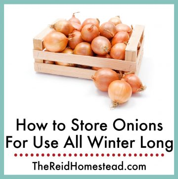 a wooden crate holding onions with text overlay How to Store Onions for Use All Winter Long