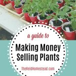 flats of tomato starts with text overlay A Guide to Making Money Selling Plants, an Easy Gardening Side Hustle