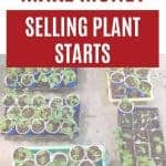trays of seedlings with text overlay How to Make Money selling plant starts