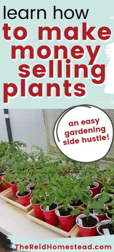 taple full of veggie plant starts with text overlay Learn How to Make Money Selling Plants