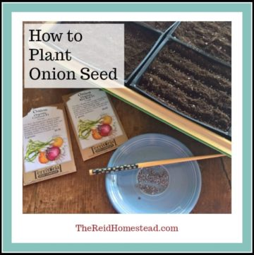 plant flat with onion seed