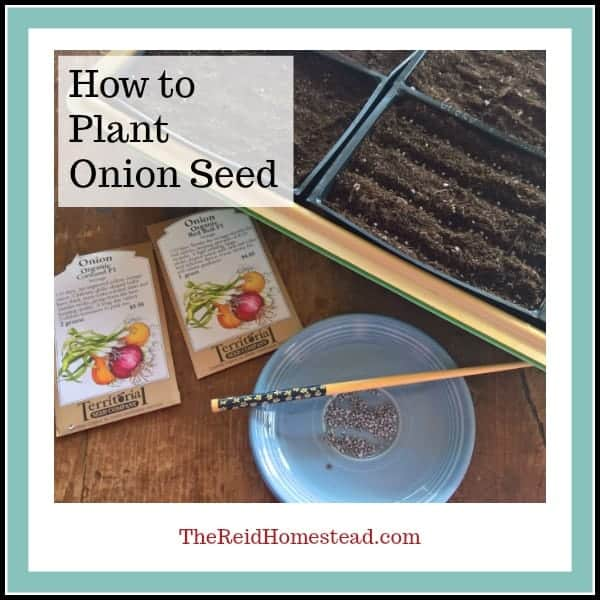 Seed Starting 101- How to Plant Onion Seed Indoors in Winter
