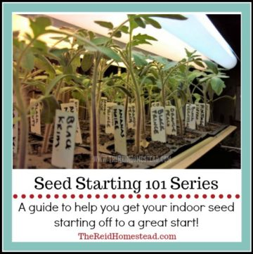 tomato seedlings under lights with text overlay seed starting 101 series: A guide to help you get your indoor seed starting off to a great start!