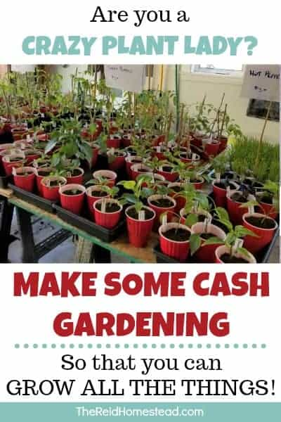 Are you growing your own vegetable starts from seed? Why not grow extra to sell? Here I share all my tips on turning gardening into a little side hustle! ~The Reid Homestead #makemoneygardening #sellingplants #gardeningforprofit #vegetablestarts #veggiestarts #seedstarting #startingseeds #makemoneyathome