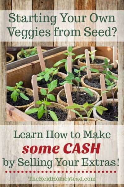 Do you grow your own Vegetable starts? Why not make some cash? I'll show you how! ~The Reid Homestead #makemoneygardening #howtosellvegetablestarts #gardeningtips #gardening #makemoneyathome #makemoneyonthehomestead #vegetablegardening