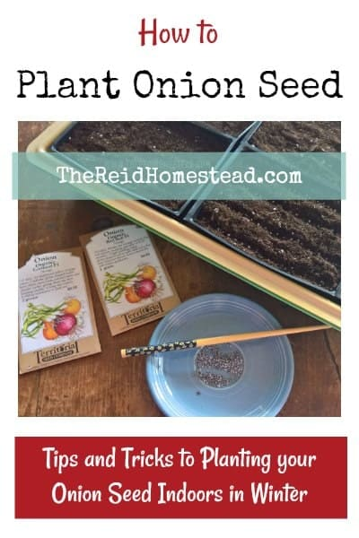 A step by step tutorial - A how to guide on How to Plant Onion Seed Indoors in Winter ~ The Reid Homestead #onions #onionseed #growingonions #plantingonionseed #vegetablegardening #gardeningtips #wintergardening #seedstartingindoors #seedstarting