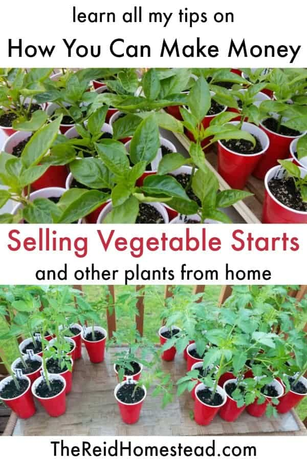 veggie starts with text overlay Learn all my tips on how you can make money selling vegetable starts and other plants from home