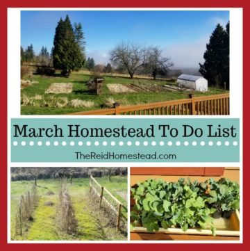 March Homestead To Do List, all the things that need getting done in March in our PNW homestead, including gardening chores, animal chores and food preservation chores! ~The Reid Homestead #homesteading #homesteadlife #homesteadtodolist #homesteadingresources #homesteadplanning