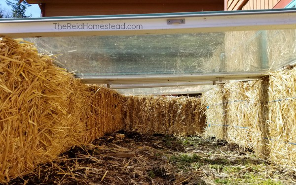 Simple DIY Straw Bale Cold Frame tutorial using old windows! Extend your growing season! ~The Reid Homestead #coldframe #wintergardening #springgardening #fallgardening #strawbalegardening