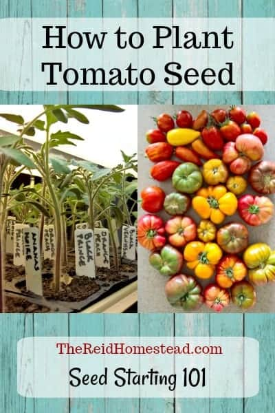 Join me in my Seed Starting 101 Series, where I share all my tips and tricks on how to successfully plant tomato seed! ~The Reid Homestead #plantingtomatoseed #howtoplanttomatoseed #tomatoseed #tomatoes #heirloomtomatoes #pastetomatoes #cherrytomatoes #vegetablegardening