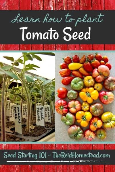 Join me in my Seed Starting 101 Series, where I share all my tips and tricks on how to successfully plant tomato seed! ~The Reid Homestead #plantingtomatoseed #howtoplanttomatoseed #growingtomatoes #tomatoseed #tomatoes #heirloomtomatoes #pastetomatoes #cherrytomatoes #vegetablegardening #gardeningtips