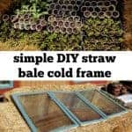 "plant starts and straw bale cold frame with text overlay ""simple DIY straw bale cold frame"""