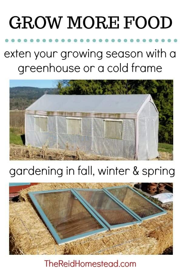 How to use a cold frame or greenhouse to extend your growing season to grow more food! An easy simple DIY straw bale cold frame from old windows! Start gardening eariler, or later into the season! #coldframe #strawbalecoldframe #DIYcoldframe #easyDIYcoldframe!