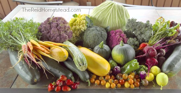 vegetable garden harvest pile of produce on table