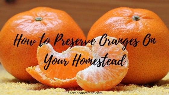 oranges with text overly How to Preserve Oranges on your Homestead