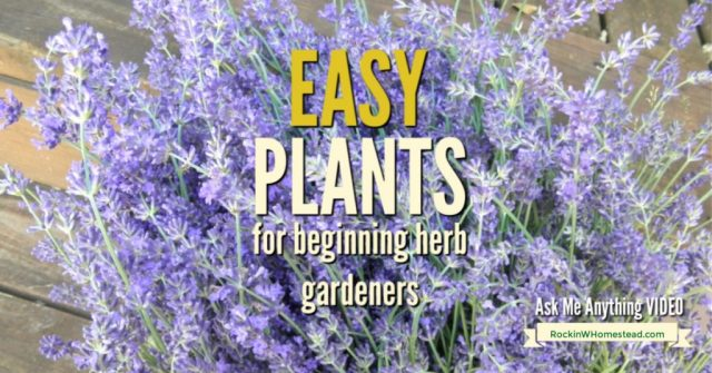 lavender plant with text overlay 10 easy plants for beginning her gardeners