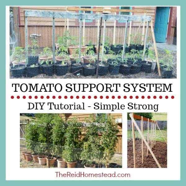 tomatoes in pots with support system text overly Tomato Support System - DIY Tutorial - Simple String
