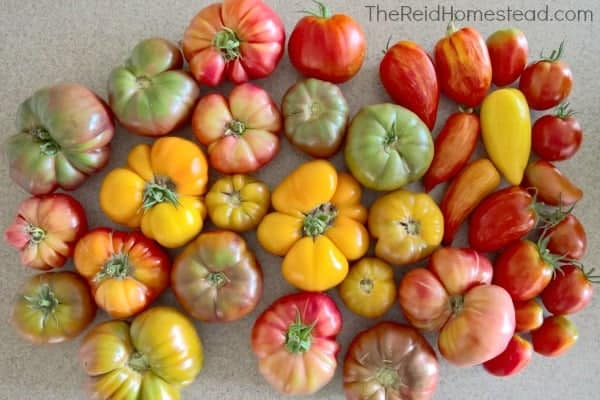 heirloom tomatoes in variety of colors