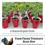 tomato plants with text overlay free tomato plants from cuttings & prunings