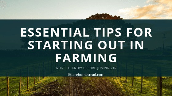 text banner with Essential Tips for Starting Out in Farming