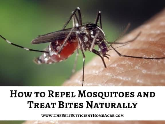 mosiquito on skin with text overlay How to Repel Mosquitoes and Treat Bites Naturally